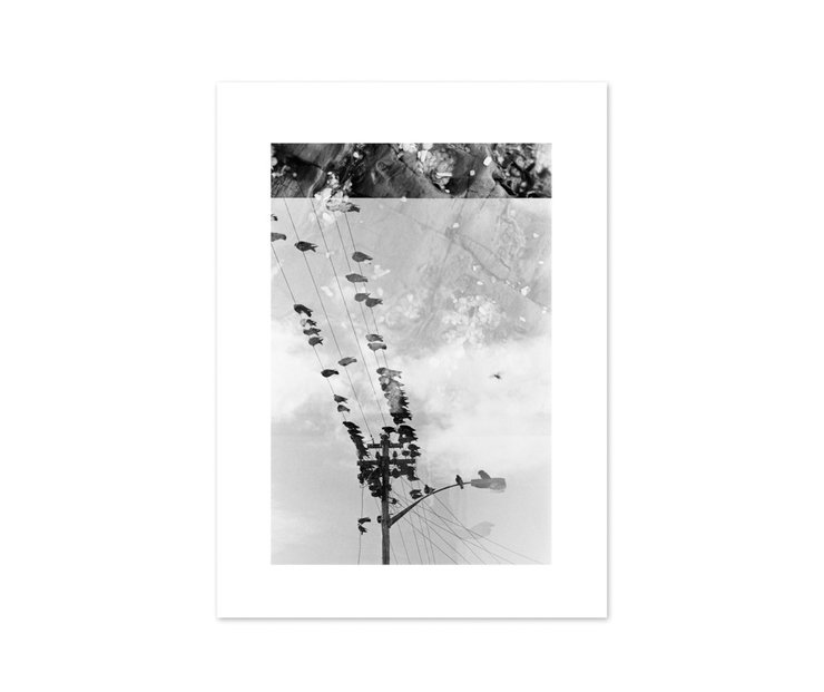 Photographic Print: Observatory Pigeons by Janet Botes