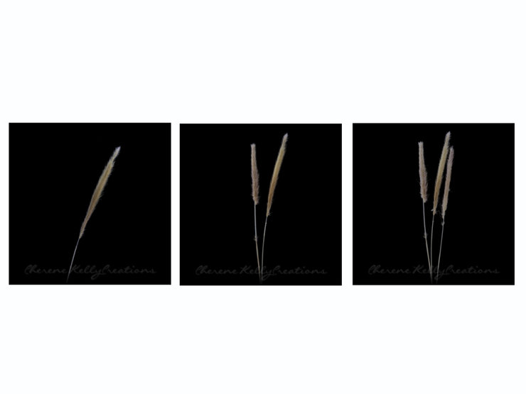 Canvas Wall Art - Dried Grass #3 (3 x 40cm x 40cm) - Set of 3 by CKCreations