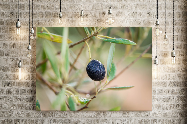 Dewy Olive On Canvas by Vermeulen Photography